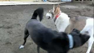 http://osanpoikuyo.blog112.fc2.com/ 離島の伊豆大島で 犬、猫、総勢49...