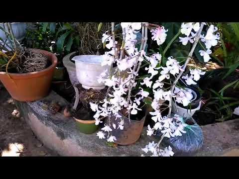 Ngắm hoa lan