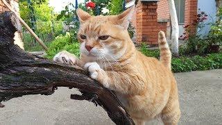 Relaxing Cat Video 57