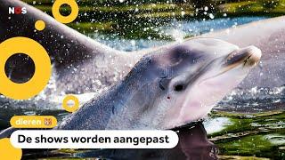 Dolfinarium laat dolfijnen en walrussen geen kunstjes meer doen