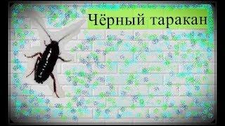 Чёрный таракан в центре города Харькова