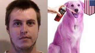 Burglar paints dog purple after crashing stolen car and breaking into house - TomoNews