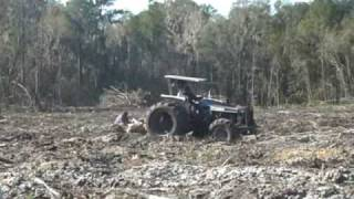 Pine Tree Planting