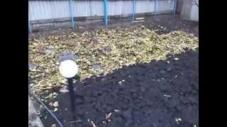 Посадка клубники под чёрную плёнку  часть 2 - результат.(Результат посадки клубники под чёрную плёнку. Часть 2., 2015-11-18T21:32:36.000Z)