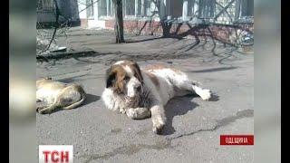 В Чорноморську волонтери збирають гроші на пам'ятник собаці