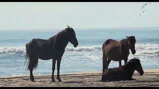 Wild Horses NC Outer Banks - Wild Photo Adventures
