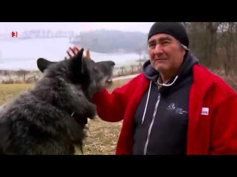 Newton - Die mit den Wölfen tanzen | EXTREME Wölfe in Europa [HD Doku DEUTSCH] 2016