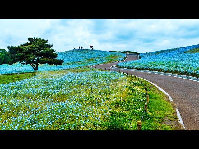 10 Celestiales Jardines de Flores mas Hermosos del Mundo