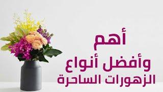 أهم وأفضل أنواع الزهورات الساحرة