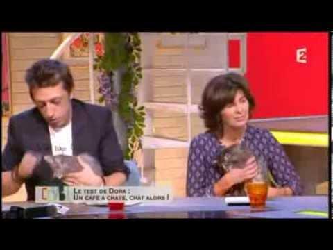 Chatons Norvégiens De L'élevage De La Natte à Chats Sur France 2 - Comment ça Va Bien