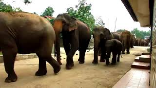 Funny videos , one man and elephant