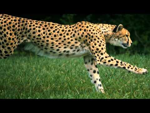 Loài vật nhanh nhất thế giới với những bước chạy tuyệt đẹp