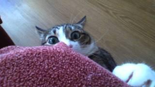 Опасный кот / Crazy cat
