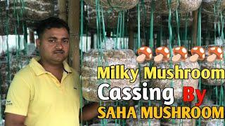 Milky Mushroom Cassing in new process by Saha Mushroom || Saha Mushroom 🍄