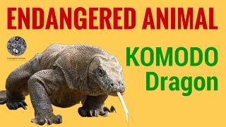 Endangered Animal Komodo Dragon: Science and Education of Endangered Animal Komodo Dragon