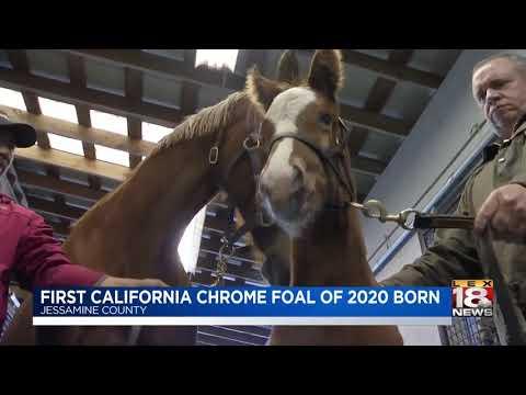 First California Chrome Foal Of 2020 Born