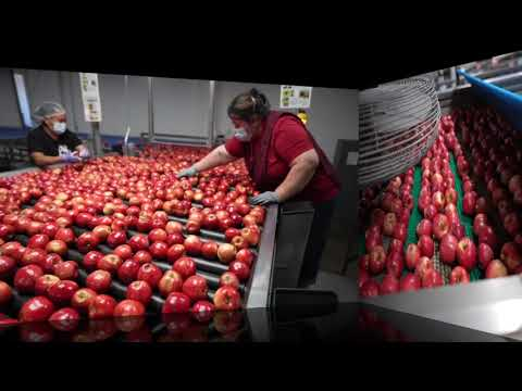 Packing and Shipping Washington New Crop 2020 Wildfire Gala Apples! July 21st!