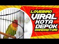 Lovebird Viral Kota Depok Gandasturi  Mp3 - Mp4 Download