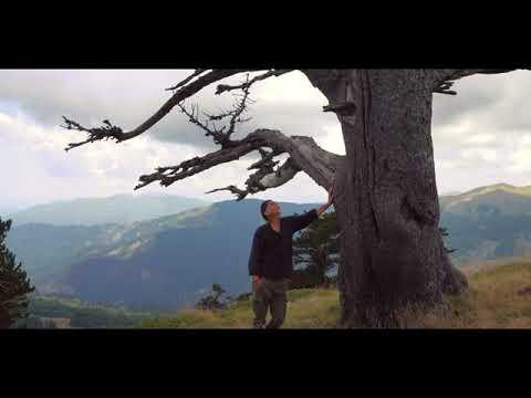 Μάκης Σεβίλογλου/Makis Seviloglou/Vasilis Nitsiakos/Pliguitu/Πληγωμένος