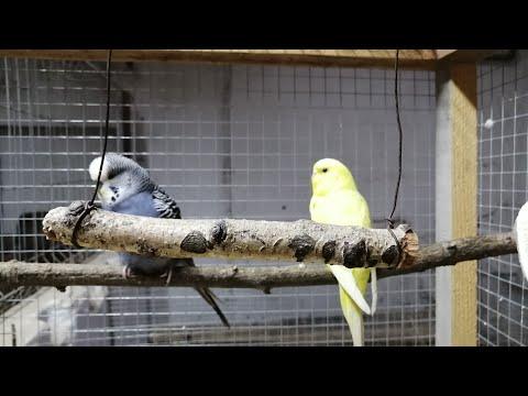 Klatka dla ptaków. from YouTube · Duration:  4 minutes 2 seconds
