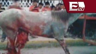 Malestar en Yucatán contra los Torneos de Lazo donde destripan  caballos/ Titulares