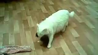 кошка за шею несет котят
