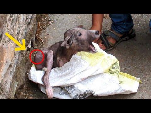 Спасение щенка немощный щенок за 15 января