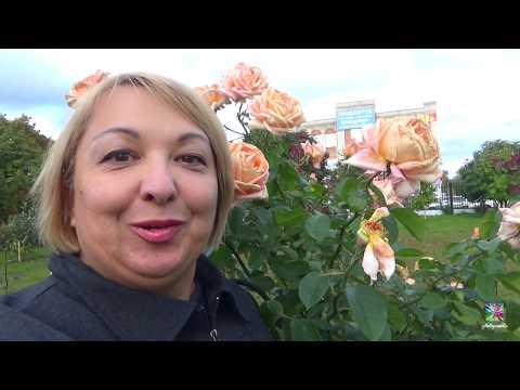 """Сенсационная НАХОДКА в Парке """"Духовности""""!А ещё Шикарные розы!  г. Димитровград"""