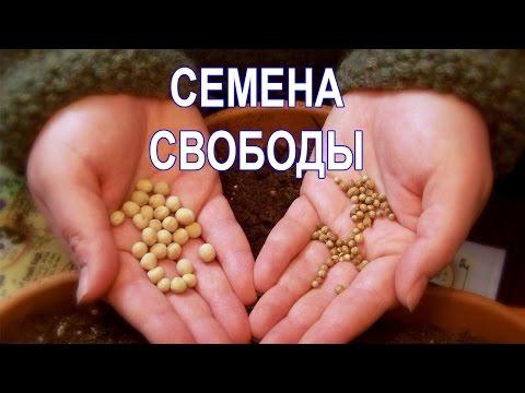 Семена Свободы