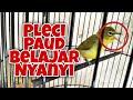 Pleci Pacitan Paud Belajar Nyanyi  Mp3 - Mp4 Download