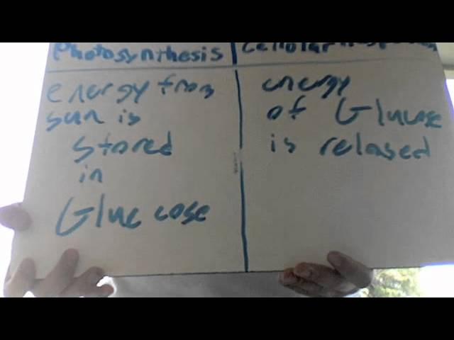 Photosynthesis And Cellular Respiration Stations Lessons