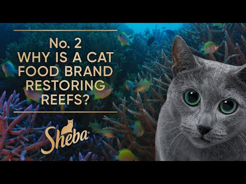 No. 2 Why is a Cat Food Brand Restoring Reefs?   Behind The Scenes   Sheba Hope Grows