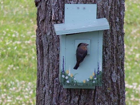 Making a Good Bluebird House