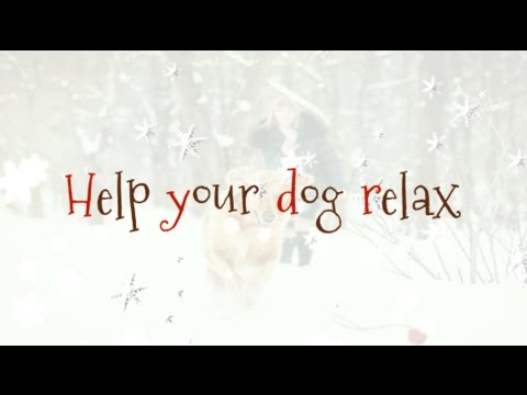 Day 2: Help your dog relax