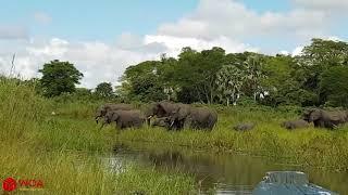 Amazing Mother Elephant Save Baby Elephant From Crocodile Hunting  Animals Hunting Fail 2019