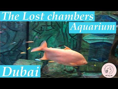 # Dubai Places to Visit / The Lost chambers Aquarium / Atlantis #39
