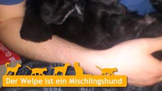 Mischlingshunde Welpen In Worms