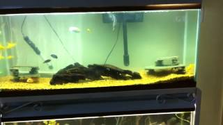 Double Stacked 55 Gallon Tanks & 85 Gallons Tank Up & Running