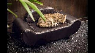 Java Whiskers Cat Café