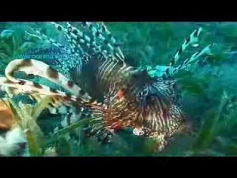Free Diver Martin Stepanek: Reverse the Tide of Ocean Destruction