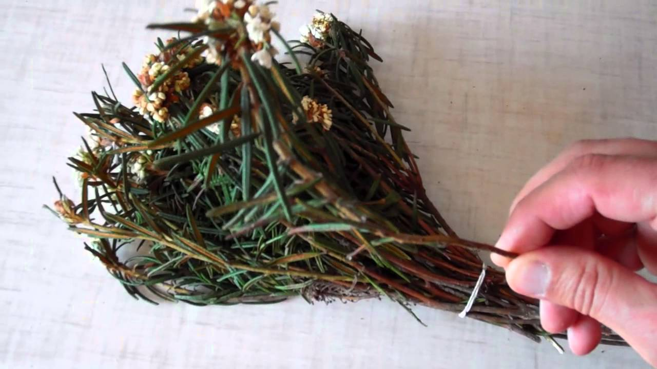 фото растения багульник