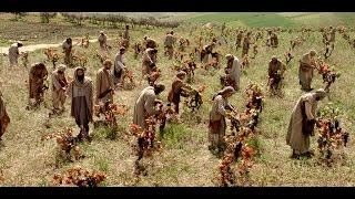 Parables of Jesus: The Parable of The Laborers In The Vineyard