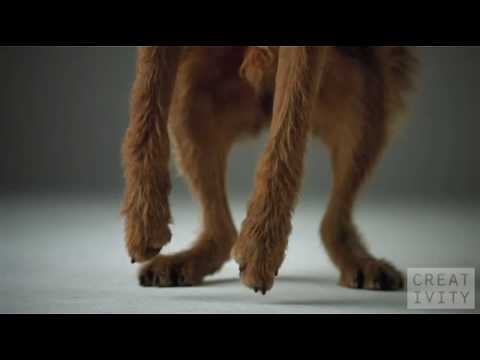 pedigree-dogs-ad-shot-1000-fps-using-the-phantom-camera