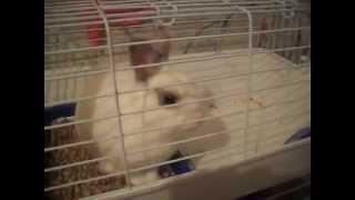Мой кролик Тобик