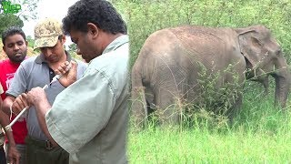 How wildlife officers sh๐ot elephants with tranquilizer guns for treatments