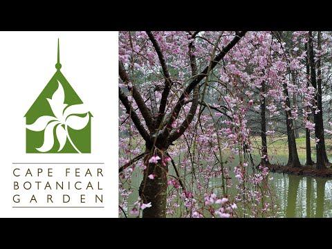 Around Carolina - Cape Fear Botanical Garden