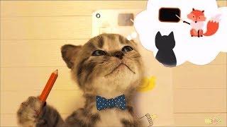 Little kitten Cat Cartoon Pet Care Game For Preschool