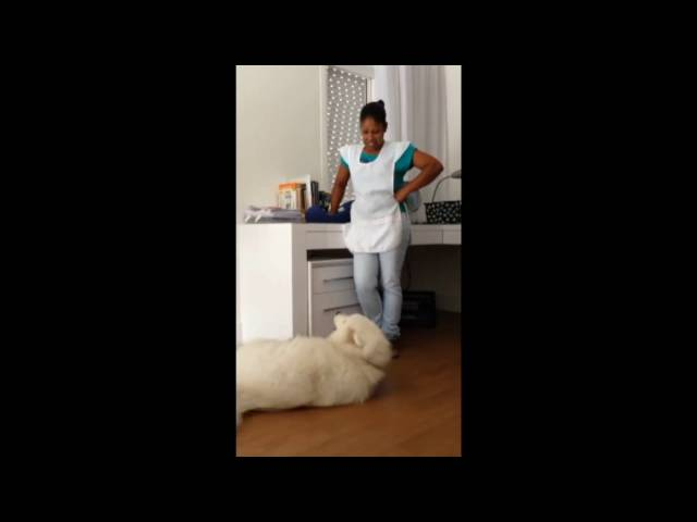 Guilty Dog Asks Mom For His Forgiveness