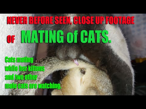 Download Close Up Footage of Never Before Seen Mating of Cats