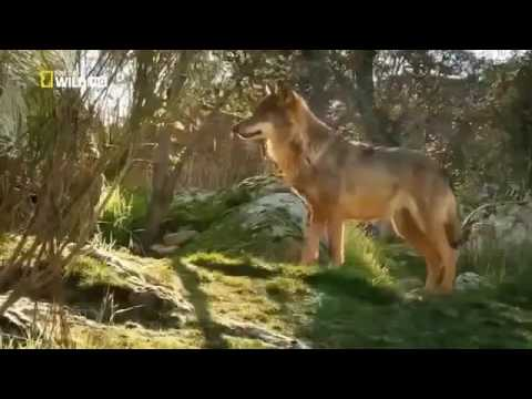 Nat Geo Documentary - Mediterranean Forest - Animal Wildlife - Animal And Pet